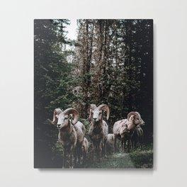 Rams / Canada Metal Print