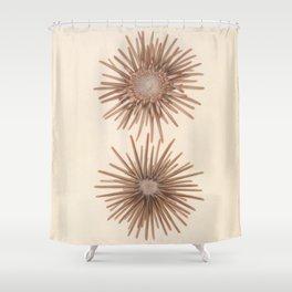 Naturalist Sea Urchins Shower Curtain