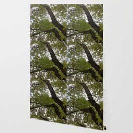 Tree and light III Wallpaper