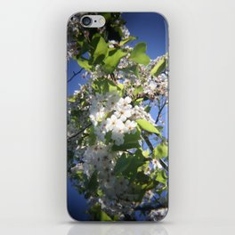 blossoms on vermont iPhone Skin