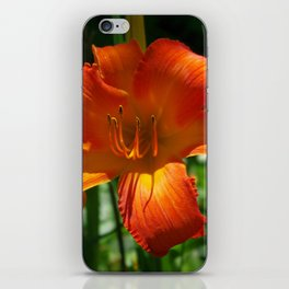 Fiery Daylily Flower - Hemerocallis 'Coleman Hawkins' iPhone Skin