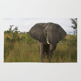 Elephant in the Wild Rug