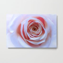Be my Valentine | close-up of a salmon-pink rose | floral art | fine art | nature-photography | Metal Print