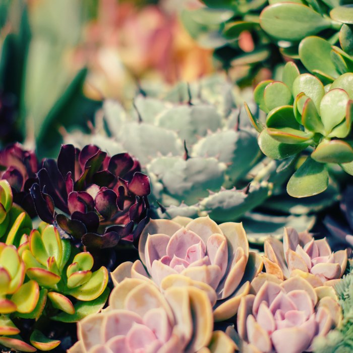 Cacti And Succulents I Comforters