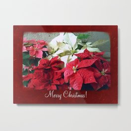 Mixed color Poinsettias 3 Merry Christmas P5F1 Metal Print