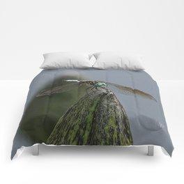 Launch Pad Comforters