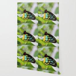 Goliath Birdwing Wallpaper