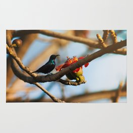 SunBird on a Bombax Ceiba, also known as red silk cotton or red cotton tree. Rug