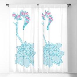 Aqua Echeveria Succulent Plant Illustration Blackout Curtain