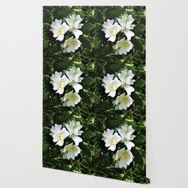 The Wild Rose Wallpaper