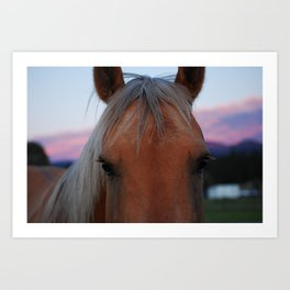 Thoughts from a Horse Art Print