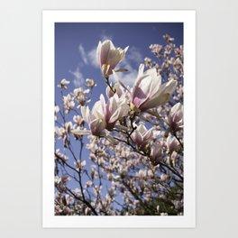 Magnolia Blossoms Shiver Against A Chill Wind Art Print