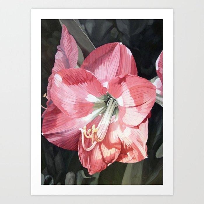 Pink Amaryllis Watercolor Botanical Garden Flower Painting Nature