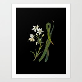 Ornithogalum Arabicum Mary Delany Delicate Paper Flower Collage Black Background Floral Botanical Art Print