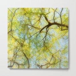 Willow Canopy Metal Print