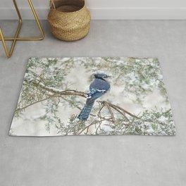 Snow Jay: American Blue Jay Rug