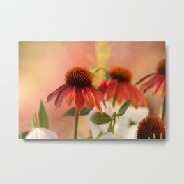 Dramatic cone flowers Metal Print
