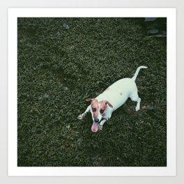 Dog in Grass Art Print