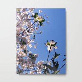White Dogwood Blossoms Metal Print
