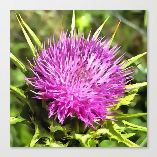 Purple Thistle Wildflower Canvas Print