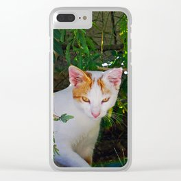 Yellow eyed cat Clear iPhone Case