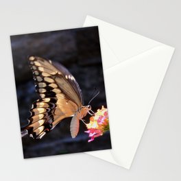 Swallowtail Overexposed Stationery Cards