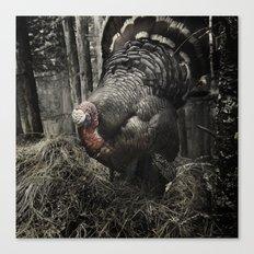 Tom Feiler Turkey Canvas Print