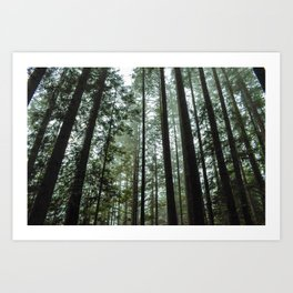 Lost in the Pacific NorthWest Art Print
