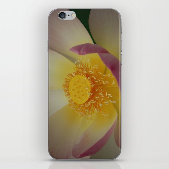 Lotus Blossom Flower 31 iPhone & iPod Skin