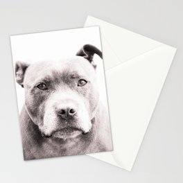 The Thinking Staffy Stationery Cards