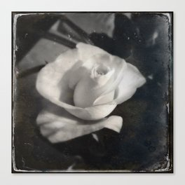 rose in foggy flashback Canvas Print