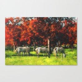 White Horse Lipizaners - Slovenia Canvas Print