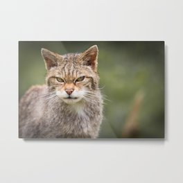 Scottish Wildcat Metal Print