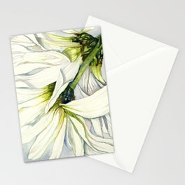 White Daisies Stationery Cards