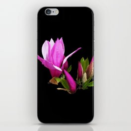 Rosy spring Magnolia on black iPhone Skin