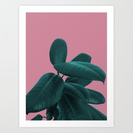 Ficus Elastica #11 #WildRose #decor #art #society6 Art Print
