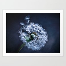 Dandelion Blues Art Print