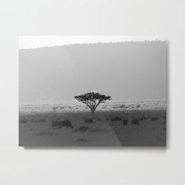 Migration in the Maasai Mara Metal Print