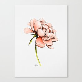 Coral Pink Peony Canvas Print
