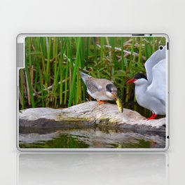 Baby Arctic Tern Feeding Laptop & iPad Skin