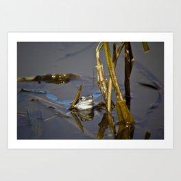 Blue Frogs 05 - Rana arvalis Art Print