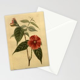 Flower nerium coccineum26 Stationery Cards