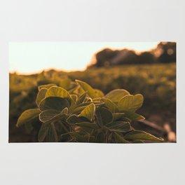 Soybean sunset Rug