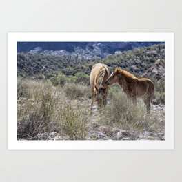 Salt River Mare and Her Colt, No. 1 Art Print