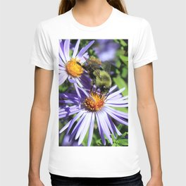 Pollen Dusted Bee on Asters T-shirt