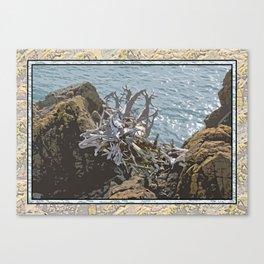 DRIFTWOOD ROOTS ON SEASIDE ROCKS Canvas Print