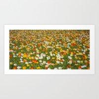Endless tulips field Art Print