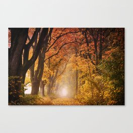 Autumn Fall Forest Path -  Nature Landscape Photography Canvas Print