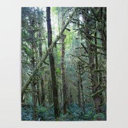 Forest Dark, Forest Deep II Poster