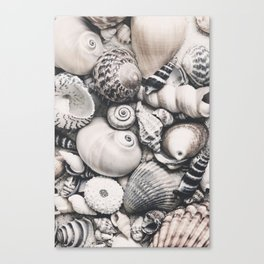 Sea Shell Collection Vintage Style Canvas Print